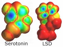 the structure and effects of lsd Lsd effects the lsd effect is described as a 'trip' because it is a long (8-12 hours) and powerful experience which takes you beyond normal perception and then back .